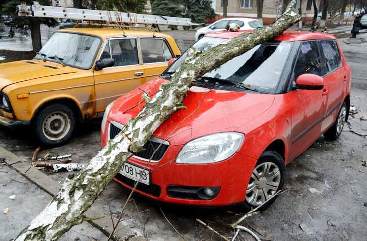 Дерево упало на машину: что делать и куда обращаться
