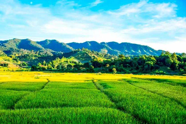 Установление границ земельного участка